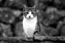 gato_arena_boonoir
