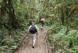Turismo ecologico