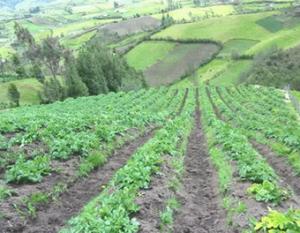 cultivos ecologicos